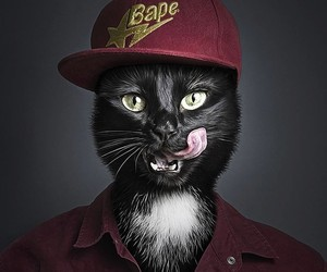 Undercat - Pets Dressed Up Like Their Owners