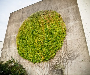 "GROW: ""Botanical Graffiti"" in Besançon by SpY"