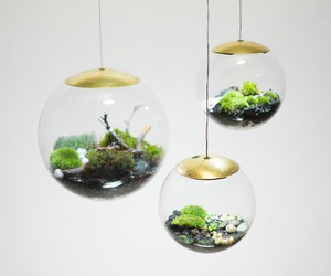 Globe - The Terrarium Lamp by Richard Clarkson