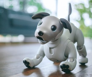 Sony Brings Its Robotic Dog Aibo Back To Life