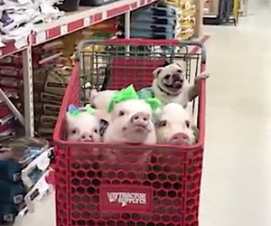 Shopping with your Besties!