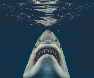 Real Life Jaws Poster by Euan Rannachan