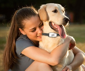 Gibi Will Make Sure You Never Lose Your Dog Again