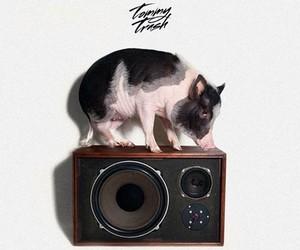 Tommy Trash - Truffle Pig [Fool's Gold]