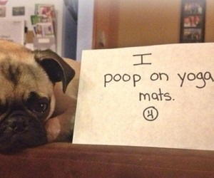 Guilty Pugs Of The Internet