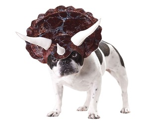 Horns and neck shield: Your dog as Triceratops