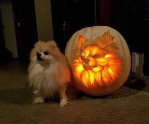 Dog-o'-lantern