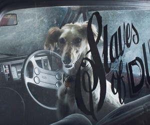 MARTIN USBORNE / MUTE: DOGS IN CARS AT NIGHT