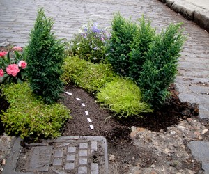 The Pothole Gardener – Miniature Gardens