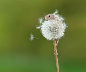 A Mouse Who Climbed Up a Dandelion
