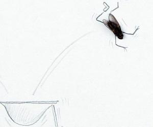 dead flys are still alive
