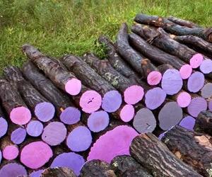 Michael McGillis' Painted Log Art
