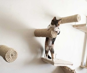 Handcrafted Cat Shelf
