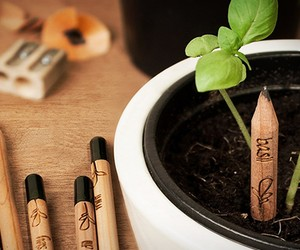 Sprout | a Pencil That Grows